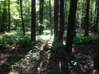 Cedarville Forest