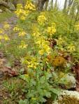 Wildflowers everywhere!