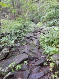 A tough trail!